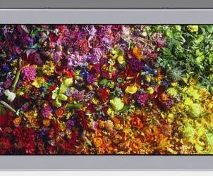 JDI-8k-lcd-display-980x420
