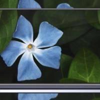Nokia 8.1 Specs